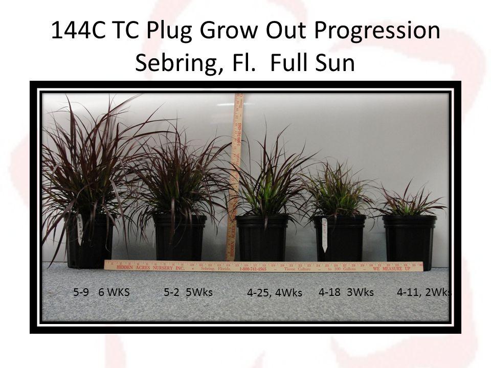 144C TC Plug Grow Out Progression Sebring, Fl.