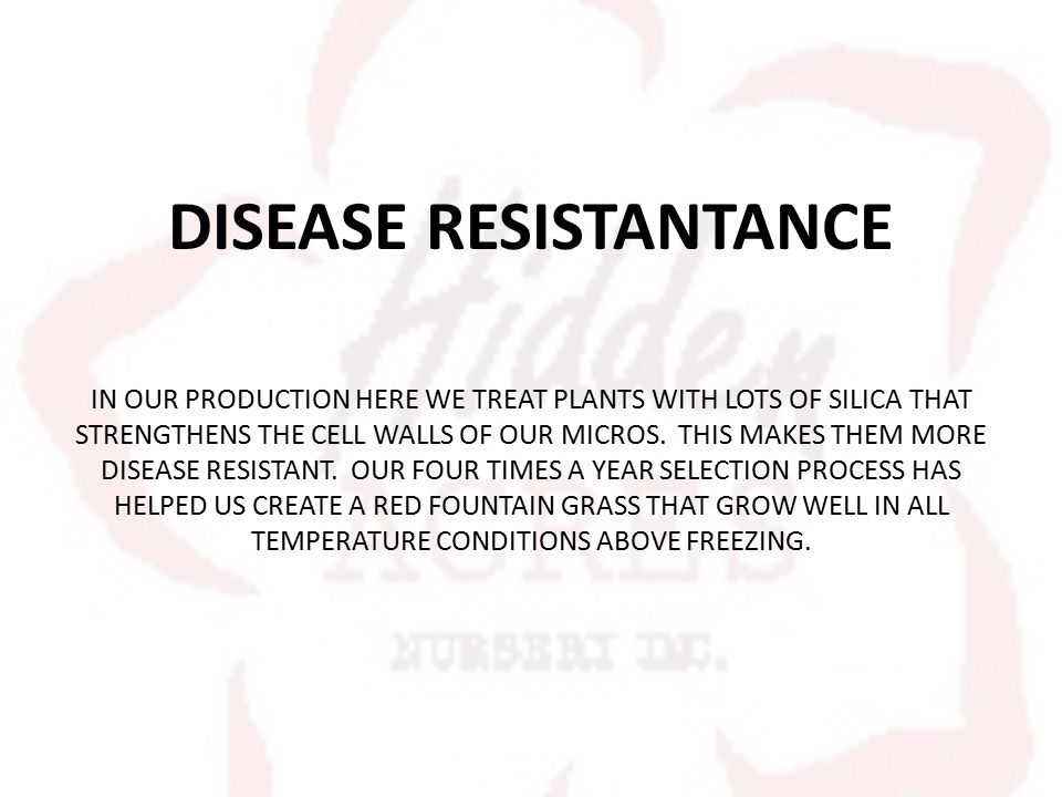 DISEASE RESISTANTANCE IN OUR PRODUCTION HERE WE TREAT PLANTS WITH LOTS OF SILICA THAT STRENGTHENS THE CELL WALLS OF OUR MICROS.