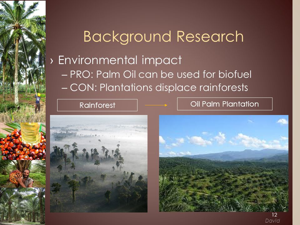 ›Environmental impact –PRO: Palm Oil can be used for biofuel –CON: Plantations displace rainforests Background Research Rainforest Oil Palm Plantation 12 David