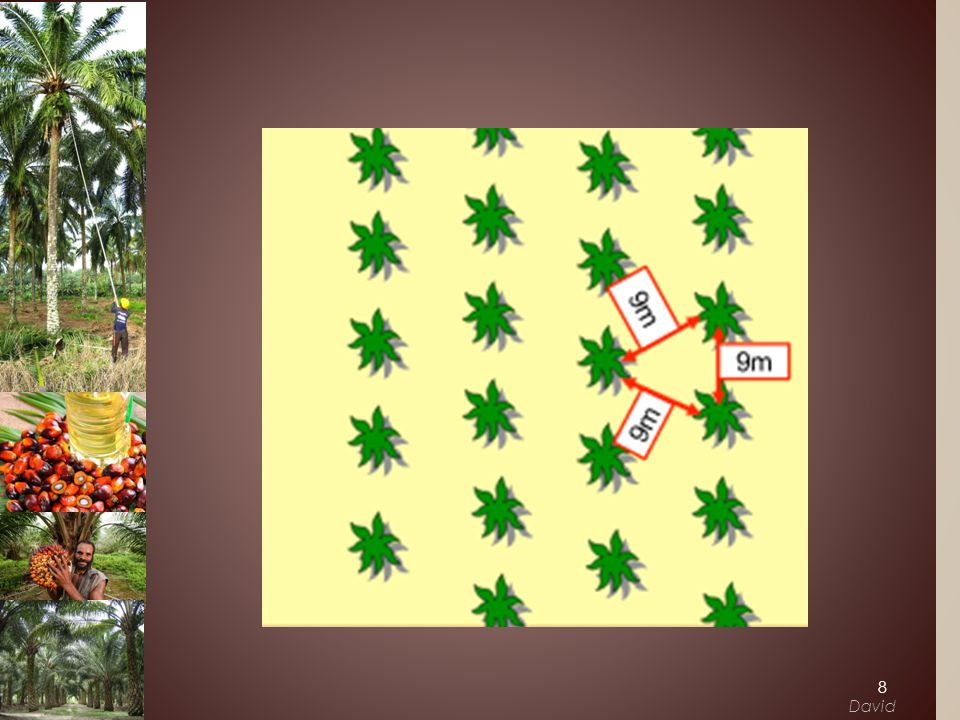 ›Potential output for oil palm production (In thousands of hectares) Business Case 19 Louis