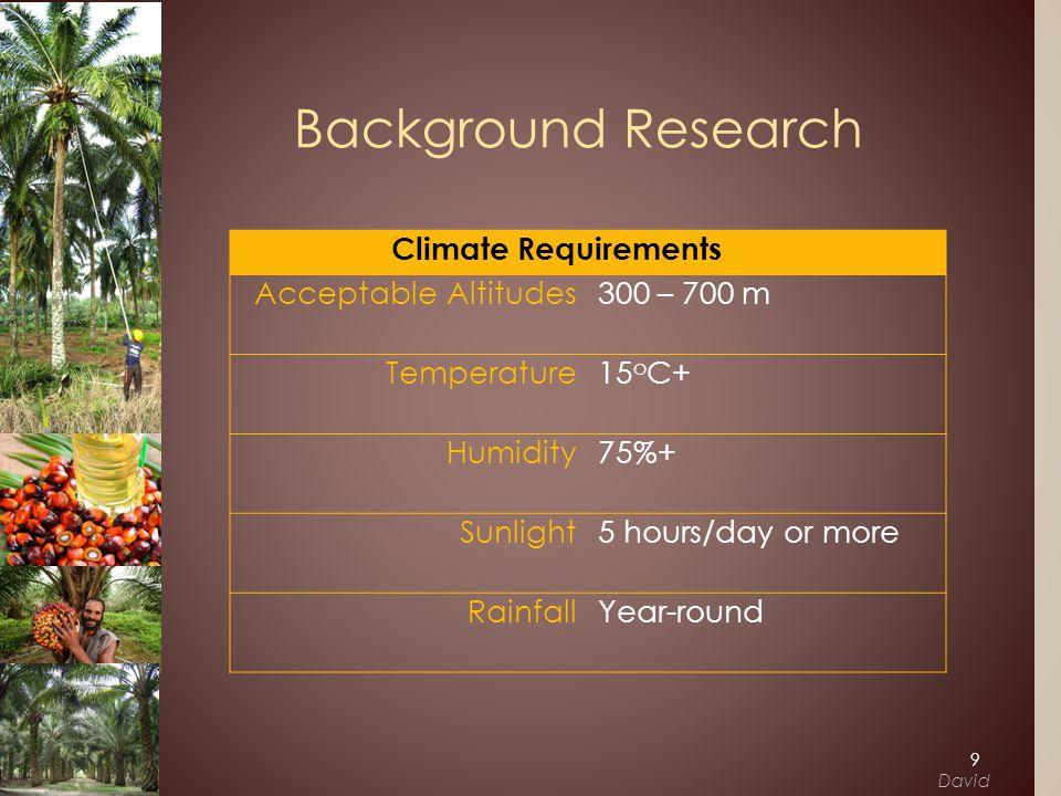 Climate Requirements Acceptable Altitudes 300 – 700 m Temperature 15 o C+ Humidity 75%+ Sunlight 5 hours/day or more Rainfall Year-round Background Research 9 David