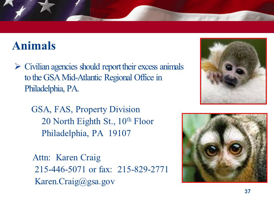 Animals  Civilian agencies should report their excess animals to the GSA Mid-Atlantic Regional Office in Philadelphia, PA. GSA, FAS, Property Divisio