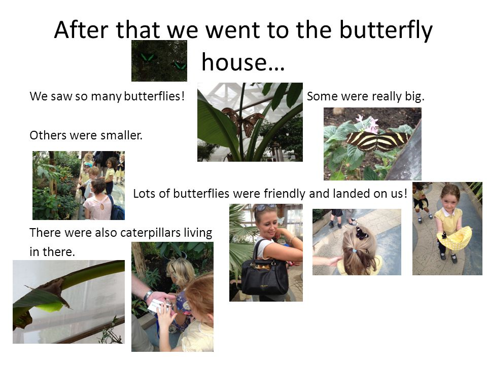 After that we went to the butterfly house… We saw so many butterflies.