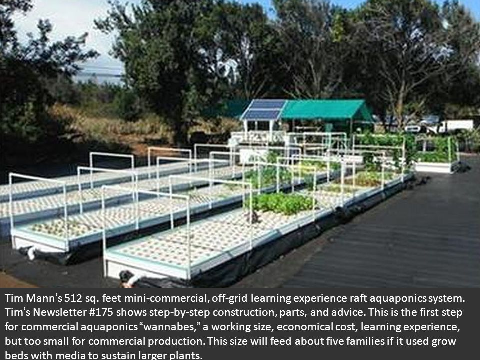 Tim Mann ' s 512 sq. feet mini-commercial, off-grid learning experience raft aquaponics system.