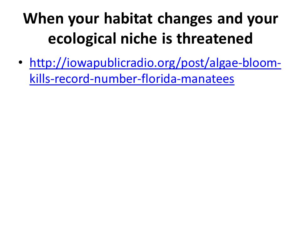 When your habitat changes and your ecological niche is threatened http://iowapublicradio.org/post/algae-bloom- kills-record-number-florida-manatees http://iowapublicradio.org/post/algae-bloom- kills-record-number-florida-manatees