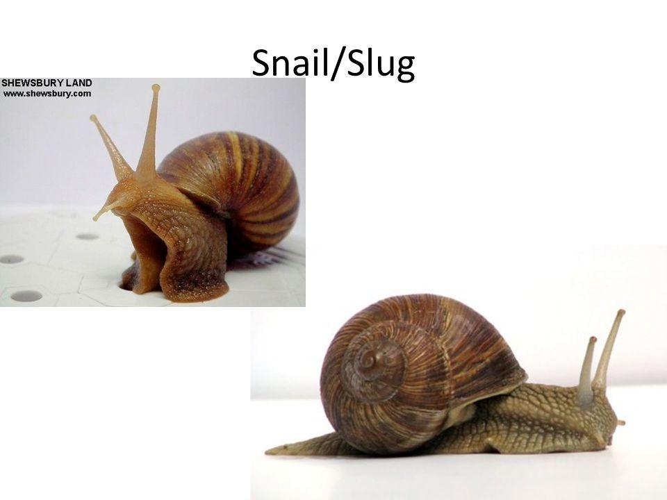 Snail/Slug