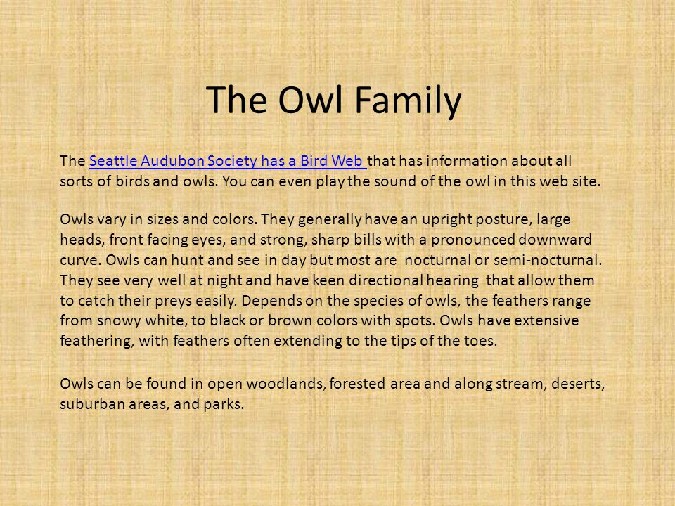 The Owl Family Owls vary in sizes and colors.
