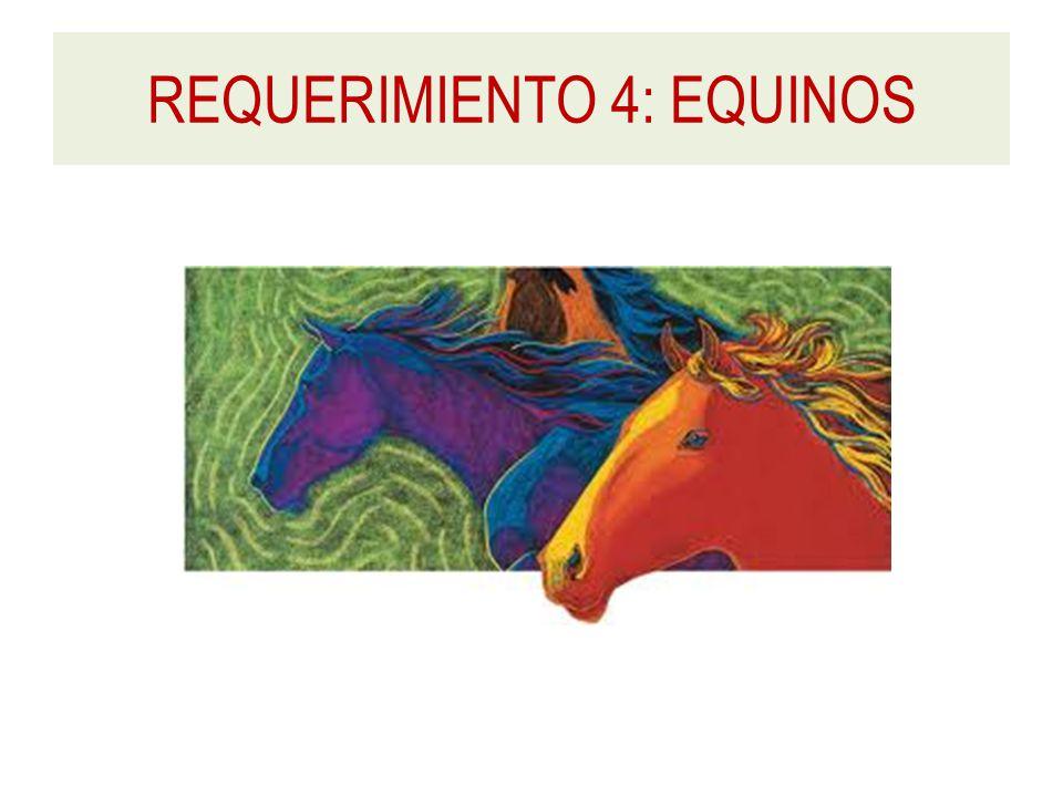 REQUERIMIENTO 4: EQUINOS