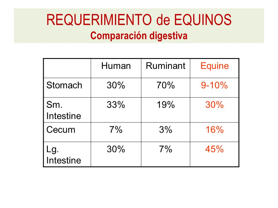 HumanRuminantEquine Stomach30%70%9-10% Sm. Intestine 33%19%30% Cecum7%3%16% Lg.