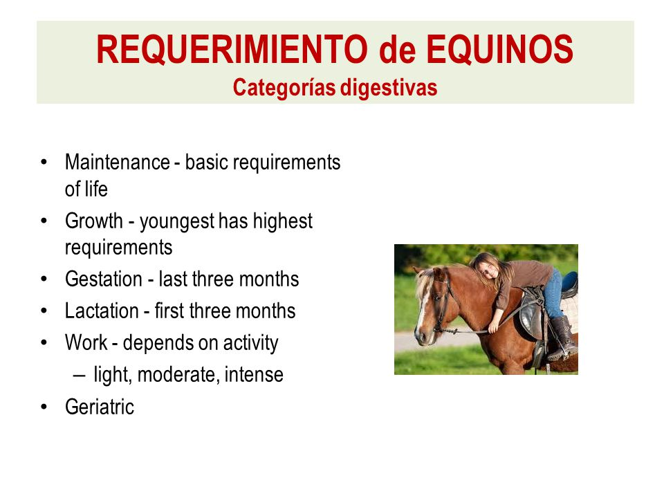 Maintenance - basic requirements of life Growth - youngest has highest requirements Gestation - last three months Lactation - first three months Work - depends on activity – light, moderate, intense Geriatric REQUERIMIENTO de EQUINOS Categorías digestivas