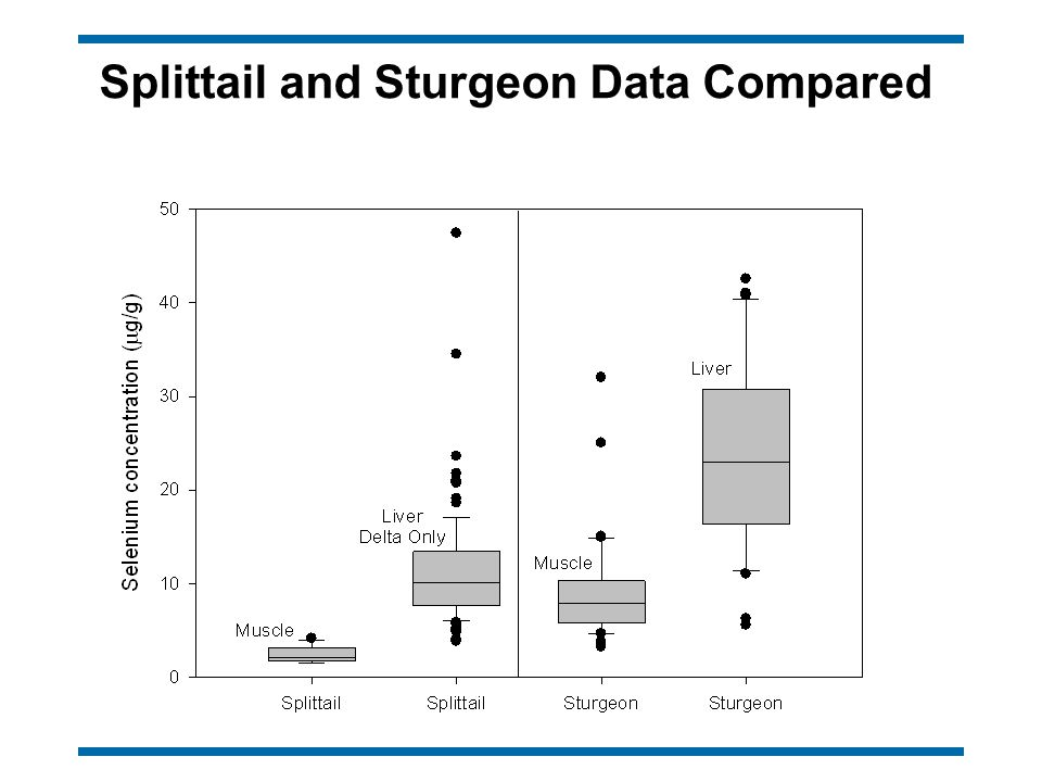 Splittail and Sturgeon Data Compared