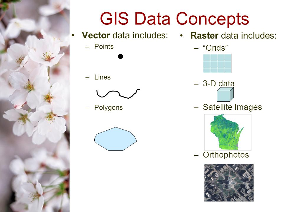 Raster data includes: – Grids –3-D data –Satellite Images –Orthophotos GIS Data Concepts Vector data includes: –Points –Lines –Polygons