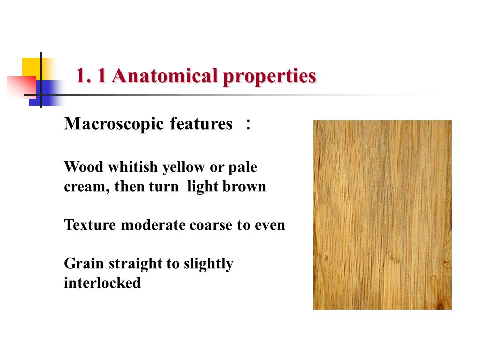 Macroscopic features : Wood whitish yellow or pale cream, then turn light brown Texture moderate coarse to even Grain straight to slightly interlocked