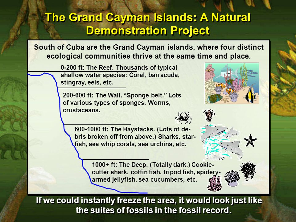 South of Cuba are the Grand Cayman islands, where four distinct ecological communities thrive at the same time and place.