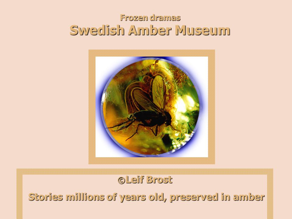 Frozen dramas Swedish Amber Museum © Leif Brost Stories millions of years old, preserved in amber Stories millions of years old, preserved in amber