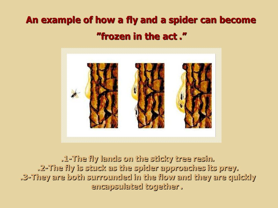 An example of how a fly and a spider can become frozen in the act .