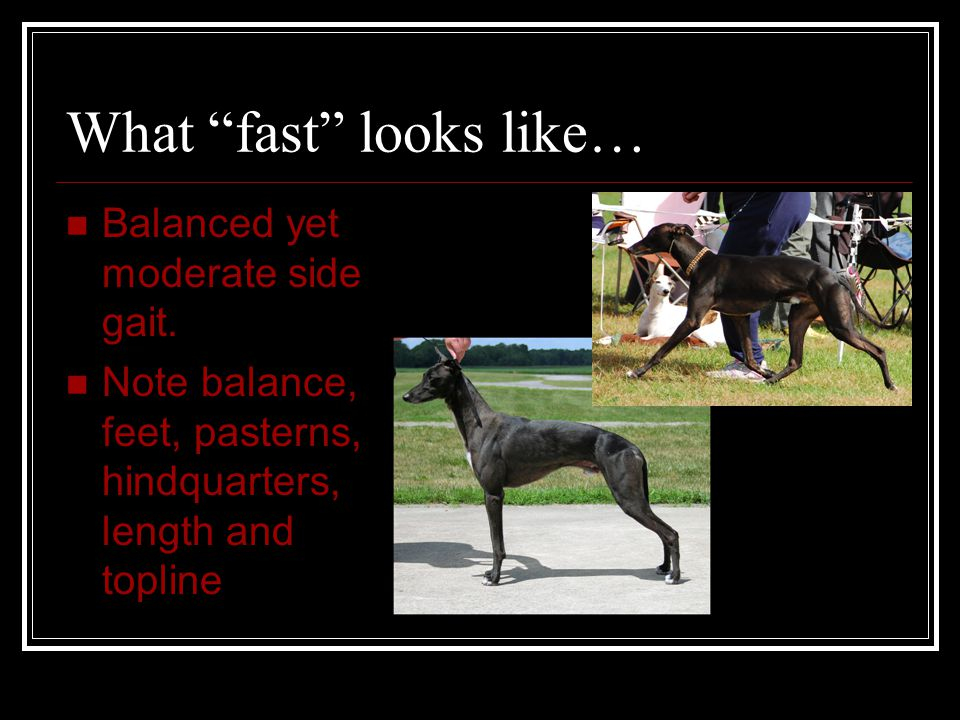 What fast looks like… Balanced yet moderate side gait.