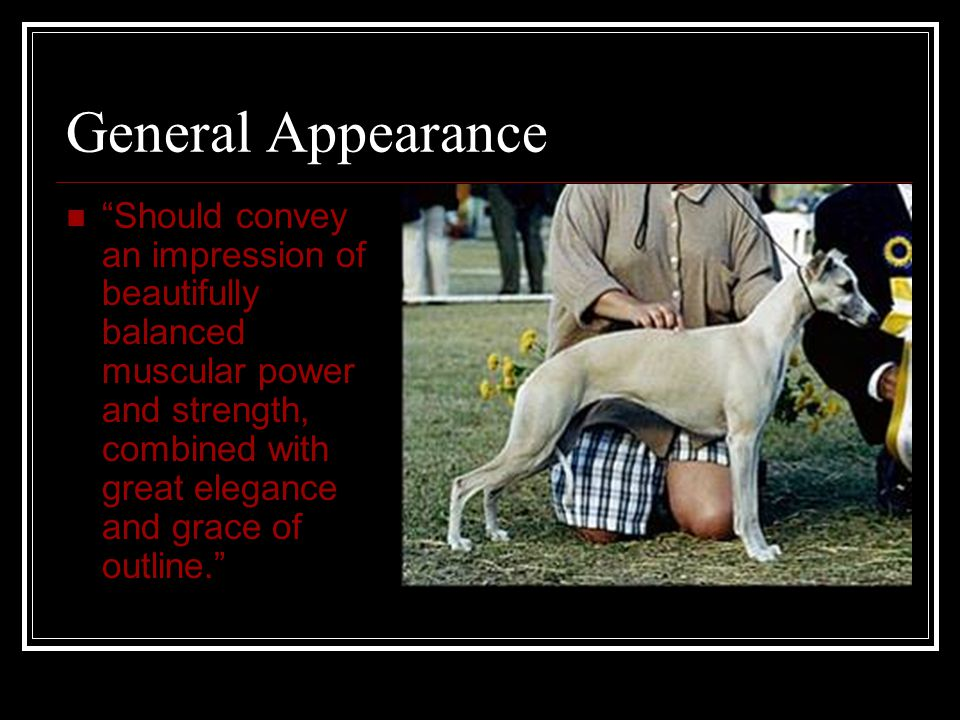 """General Appearance """"Should convey an impression of beautifully balanced muscular power and strength, combined with great elegance and grace of outline"""