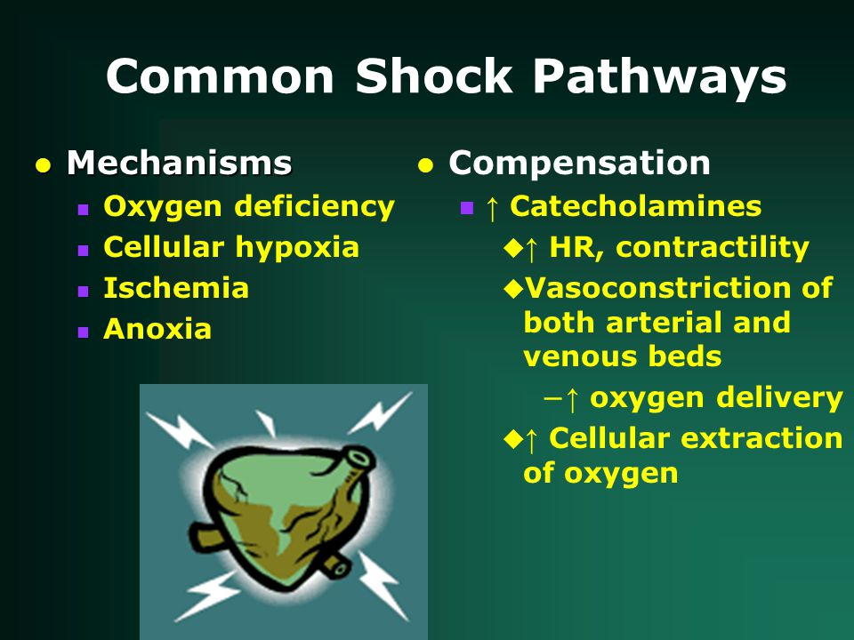 Common Shock Pathways lMechanisms nOxygen deficiency nCellular hypoxia nIschemia nAnoxia lCompensation n ↑ Catecholamines  ↑ HR, contractility u Vasoconstriction of both arterial and venous beds – ↑ oxygen delivery  ↑ Cellular extraction of oxygen