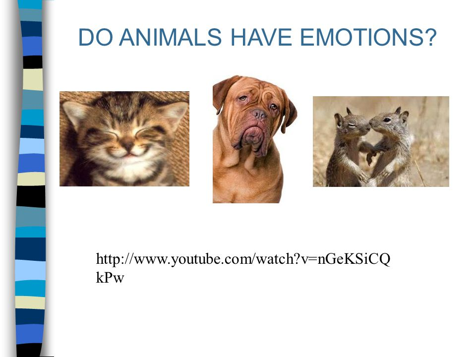 DO ANIMALS HAVE EMOTIONS? http://www.youtube.com/watch?v=nGeKSiCQ kPw
