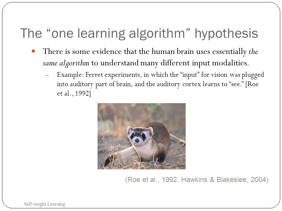 The one learning algorithm hypothesis There is some evidence that the human brain uses essentially the same algorithm to understand many different input modalities.