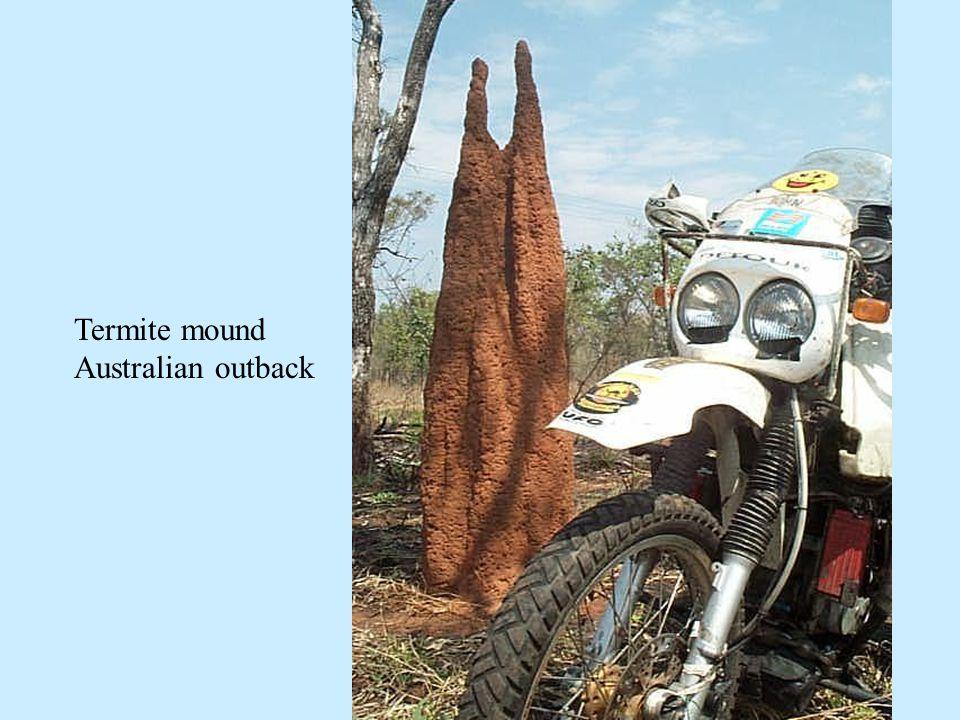 Termite mound Australian outback