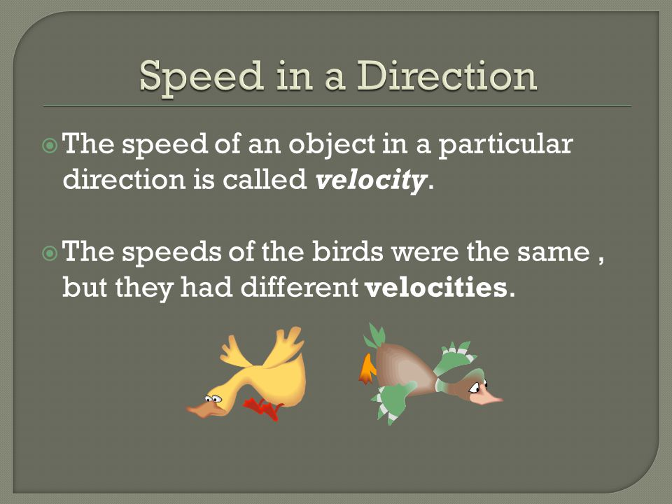  The speed of an object in a particular direction is called velocity.  The speeds of the birds were the same, but they had different velocities.