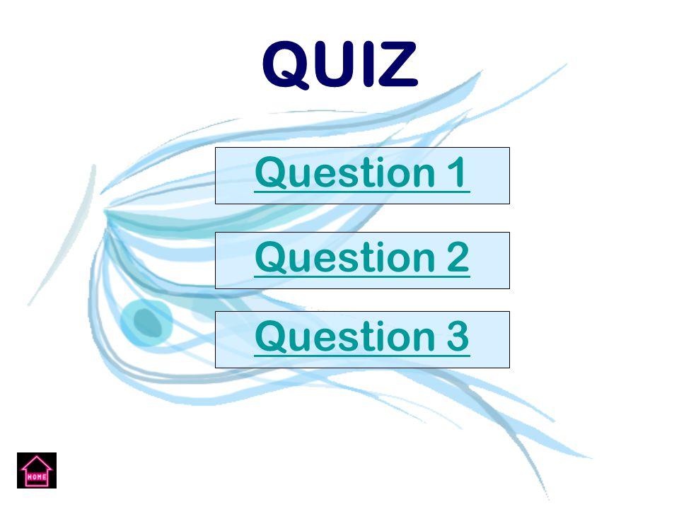 QUIZ Question 1 Question 2 Question 3
