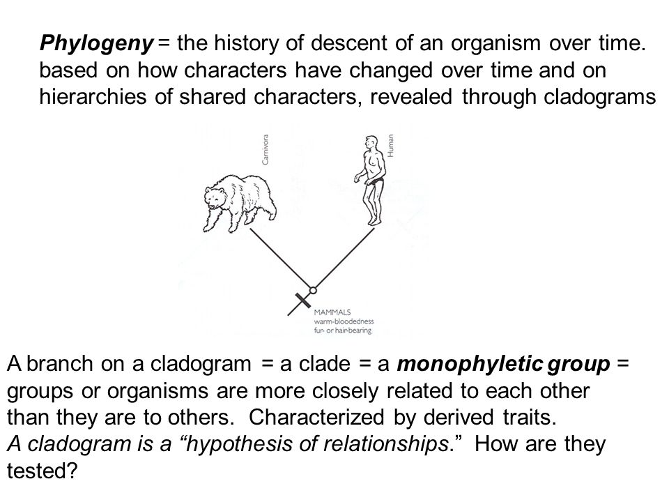 Phylogeny = the history of descent of an organism over time. based on how characters have changed over time and on hierarchies of shared characters, r