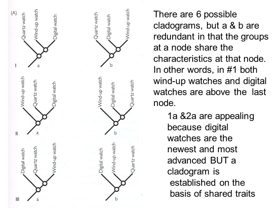 There are 6 possible cladograms, but a & b are redundant in that the groups at a node share the characteristics at that node. In other words, in #1 bo