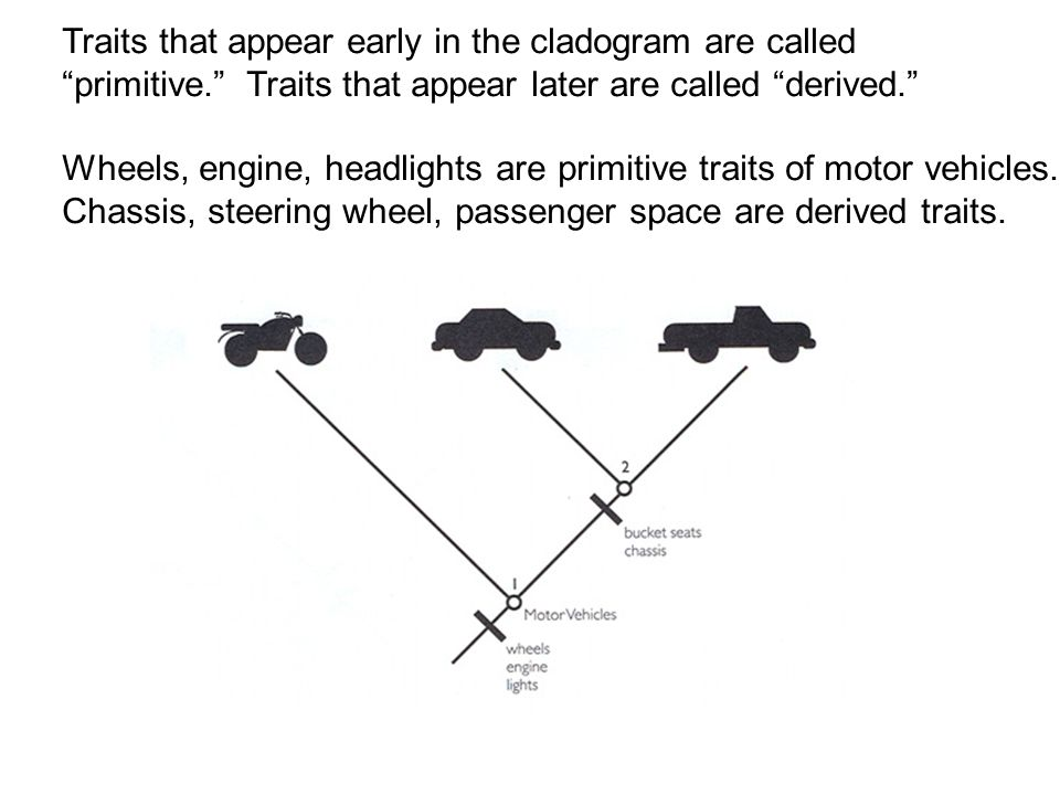 Traits that appear early in the cladogram are called primitive. Traits that appear later are called derived. Wheels, engine, headlights are primitive traits of motor vehicles.