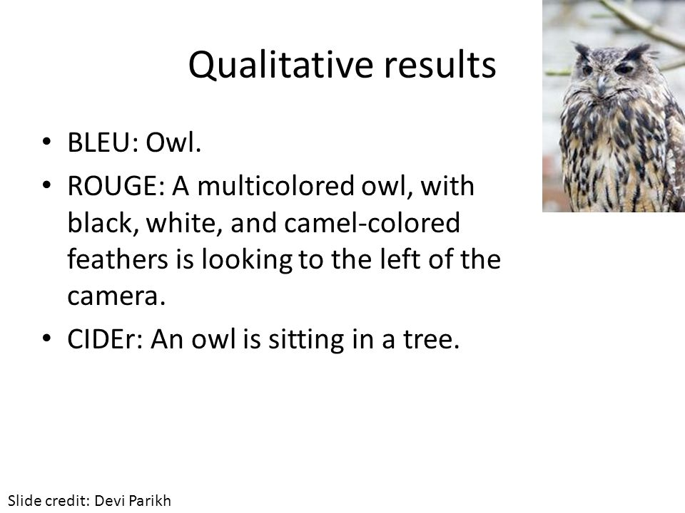 Qualitative results BLEU: Owl. ROUGE: A multicolored owl, with black, white, and camel-colored feathers is looking to the left of the camera. CIDEr: A
