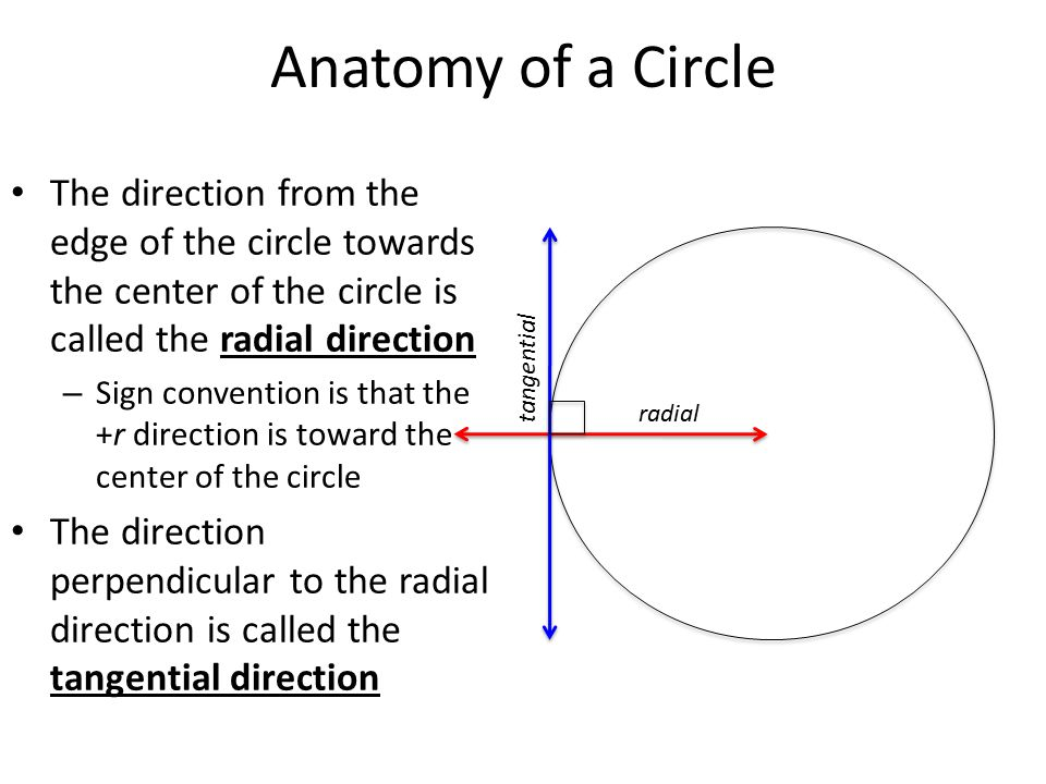 Anatomy of a Circle The direction from the edge of the circle towards the center of the circle is called the radial direction – Sign convention is that the +r direction is toward the center of the circle The direction perpendicular to the radial direction is called the tangential direction radial tangential