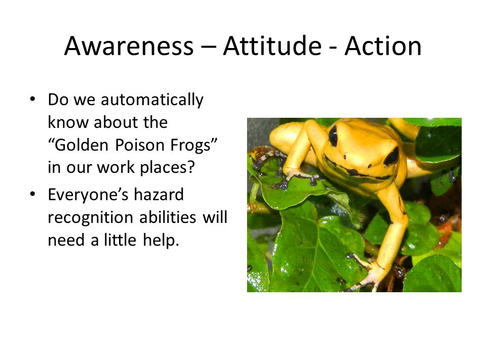 Awareness – Attitude - Action Do we automatically know about the Golden Poison Frogs in our work places.