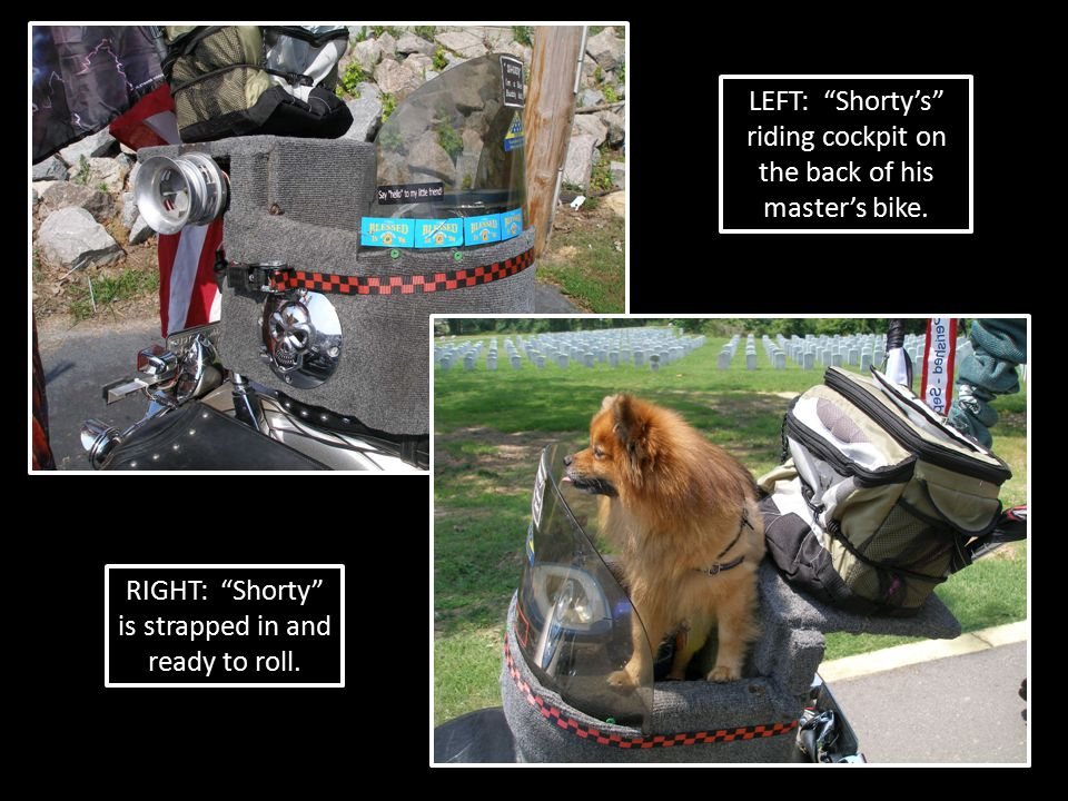 "LEFT: ""Shorty's"" riding cockpit on the back of his master's bike. RIGHT: ""Shorty"" is strapped in and ready to roll."