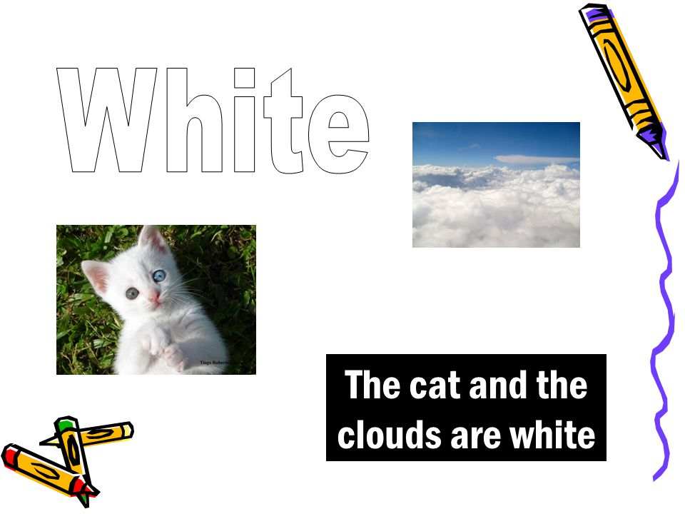 The cat and the clouds are white