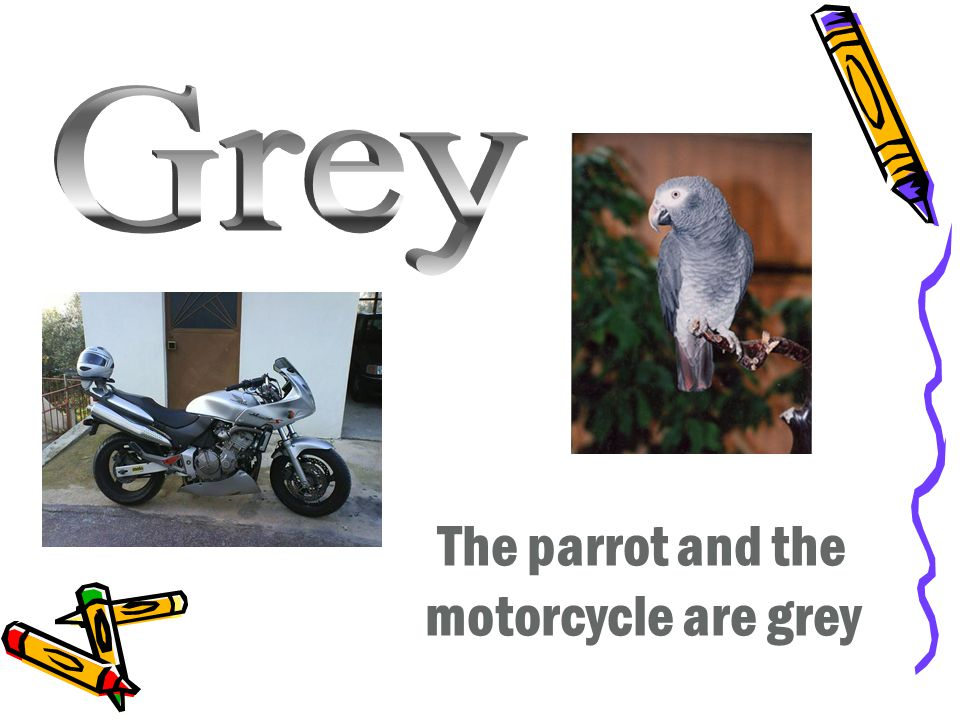 The parrot and the motorcycle are grey