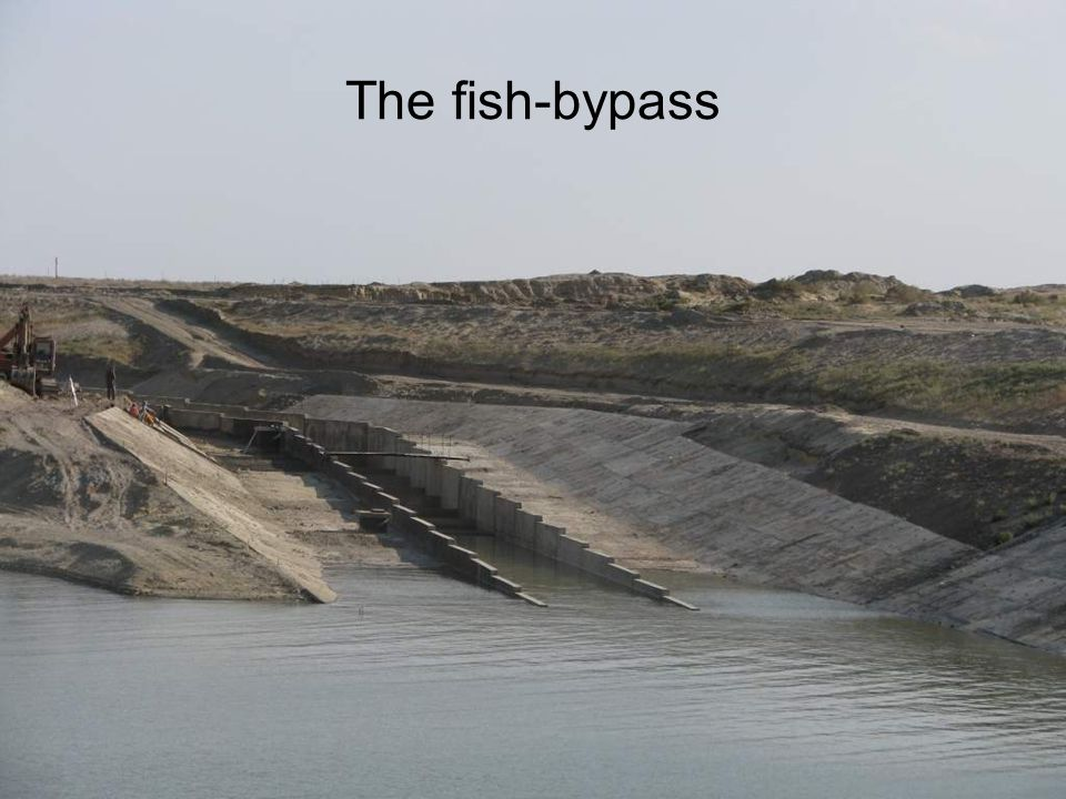 The fish-bypass
