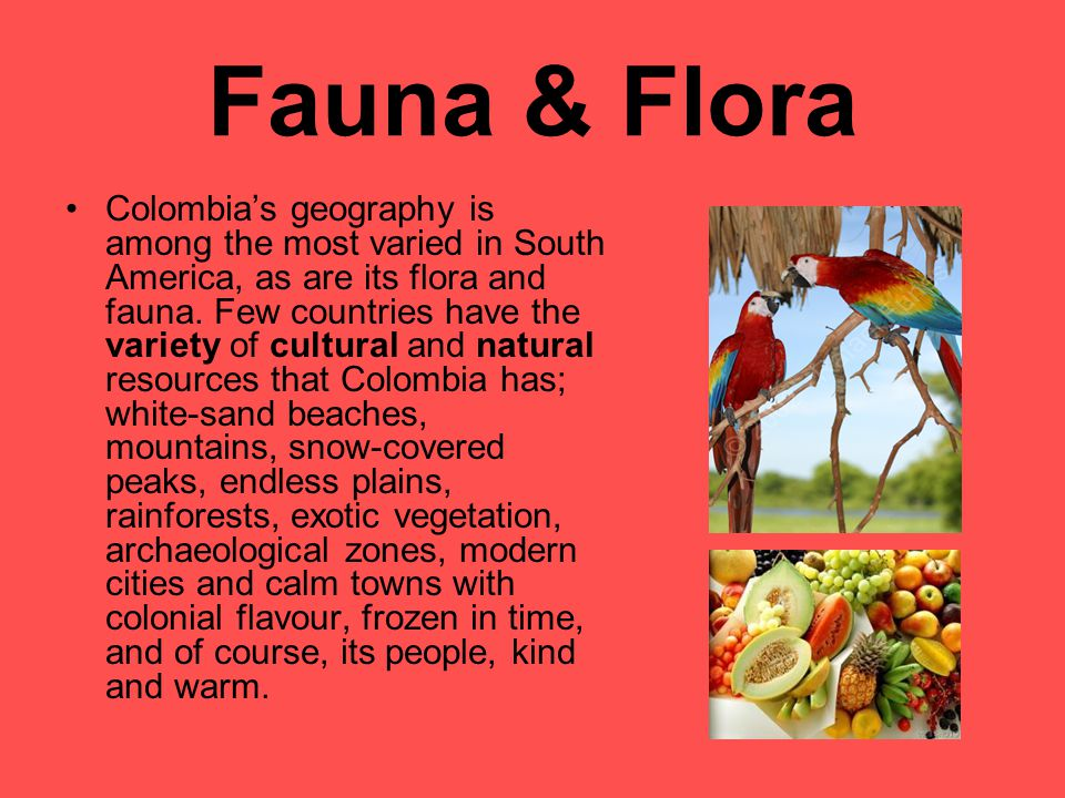 Fauna & Flora Colombia's geography is among the most varied in South America, as are its flora and fauna.