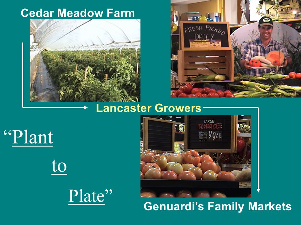 Plant Cedar Meadow Farm Lancaster Growers Genuardi's Family Markets to Plate Plant to Plate