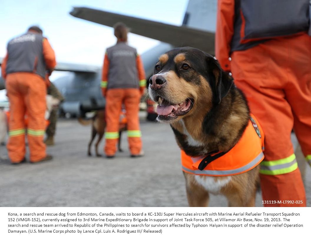Kona, a search and rescue dog from Edmonton, Canada, waits to board a KC-130J Super Hercules aircraft with Marine Aerial Refueler Transport Squadron 152 (VMGR-152), currently assigned to 3rd Marine Expeditionary Brigade in support of Joint Task Force 505, at Villamor Air Base, Nov.