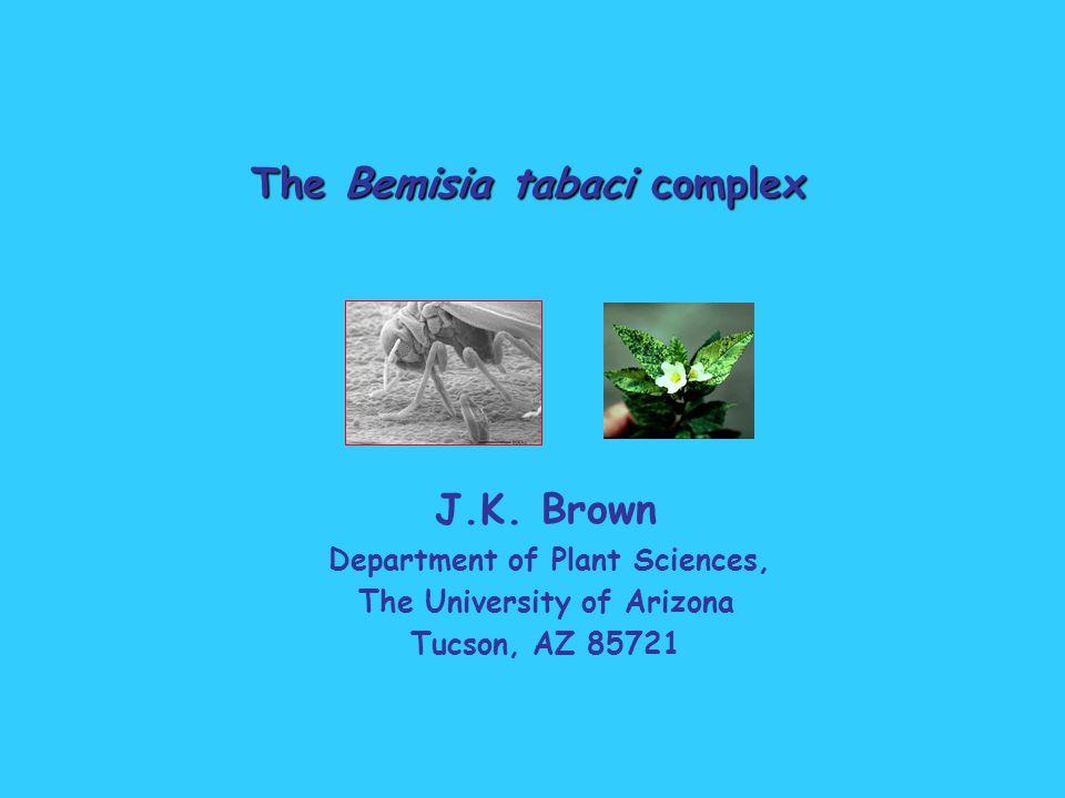 The Bemisia tabaci complex J.K.