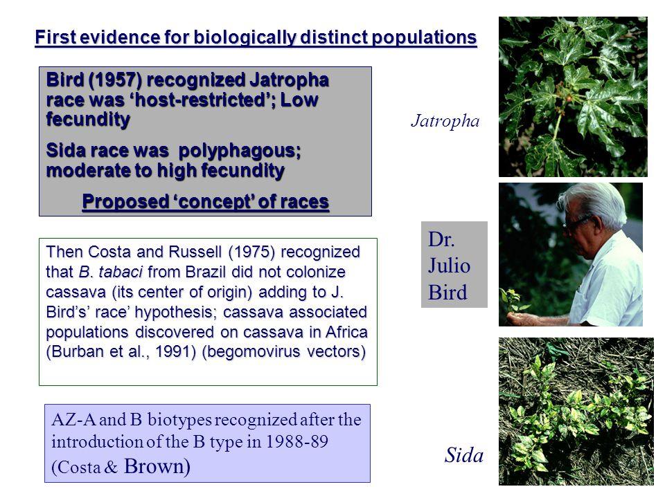 First evidence for biologically distinct populations Jatropha Sida Dr.