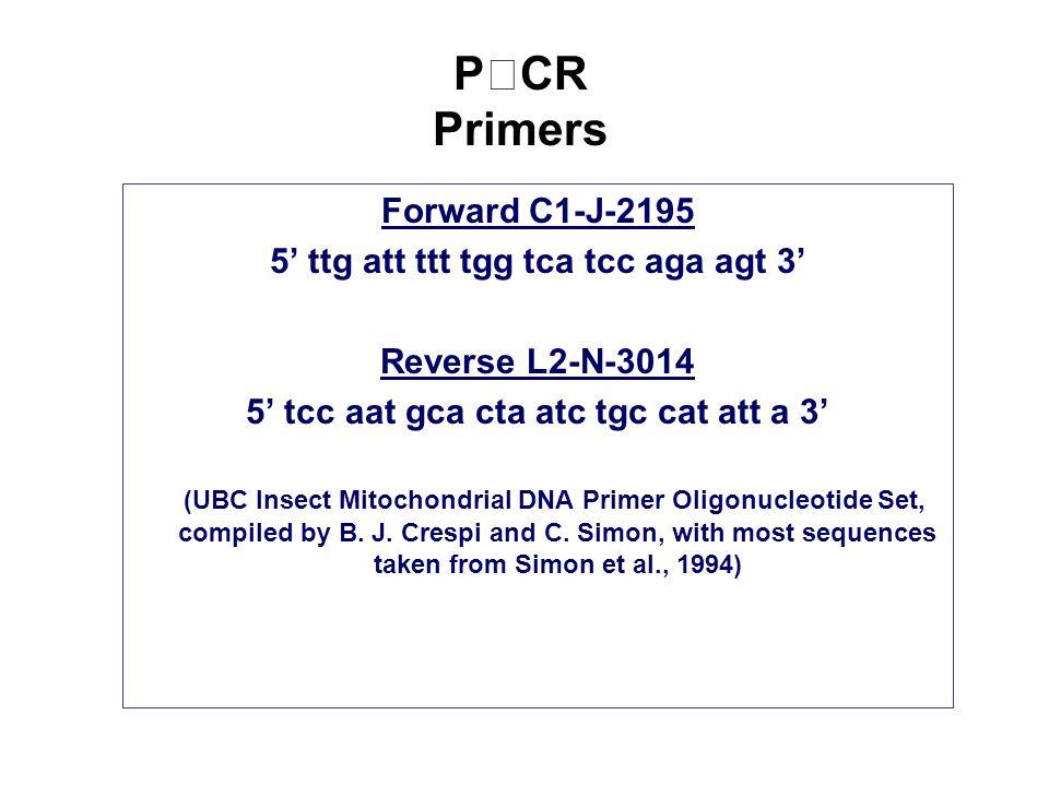 PCR Primers Forward C1-J-2195 5' ttg att ttt tgg tca tcc aga agt 3' Reverse L2-N-3014 5' tcc aat gca cta atc tgc cat att a 3' (UBC Insect Mitochondrial DNA Primer Oligonucleotide Set, compiled by B.