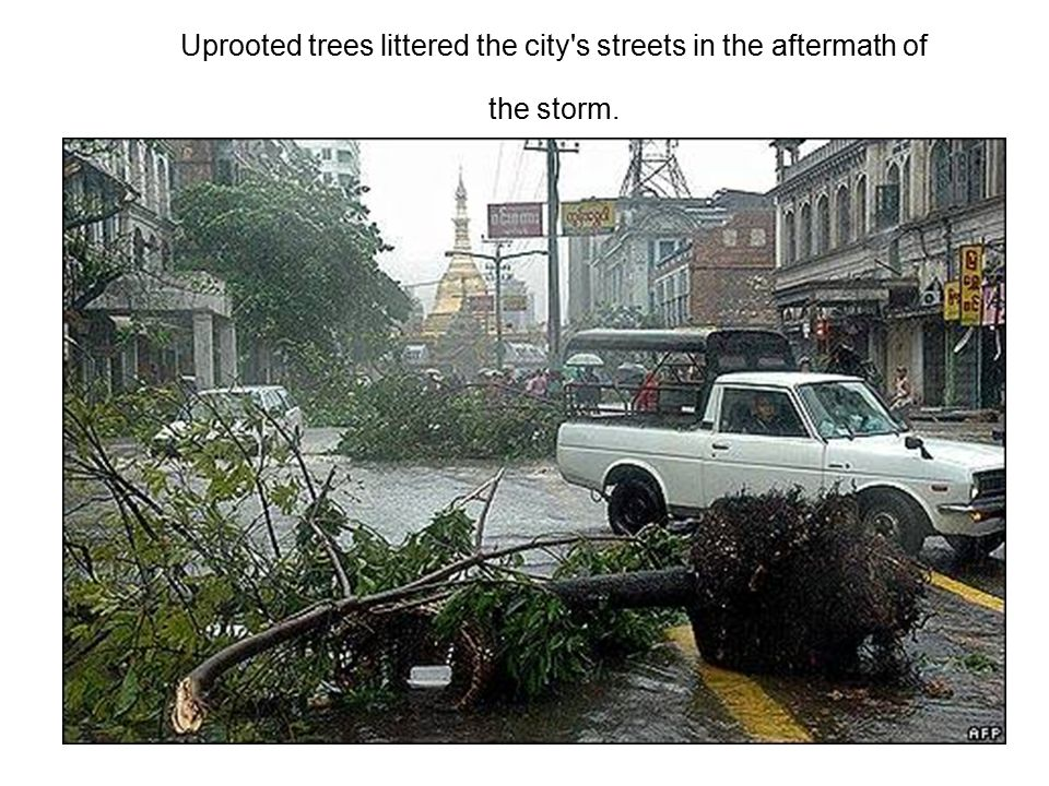 Uprooted trees littered the city s streets in the aftermath of the storm.