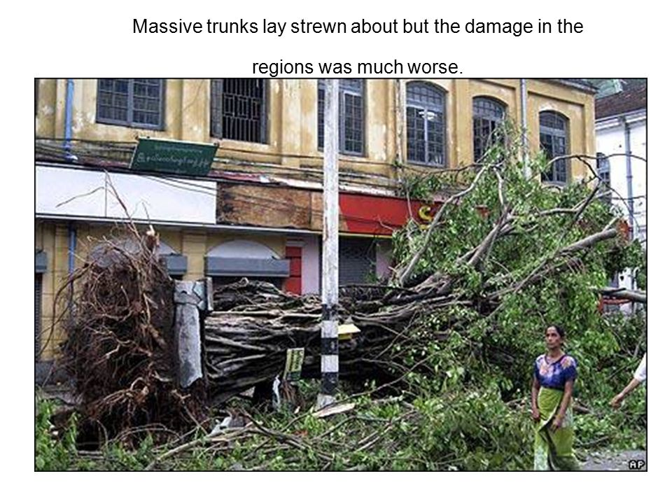 Massive trunks lay strewn about but the damage in the regions was much worse.