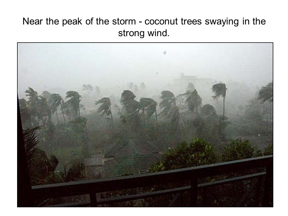 Near the peak of the storm - coconut trees swaying in the strong wind.