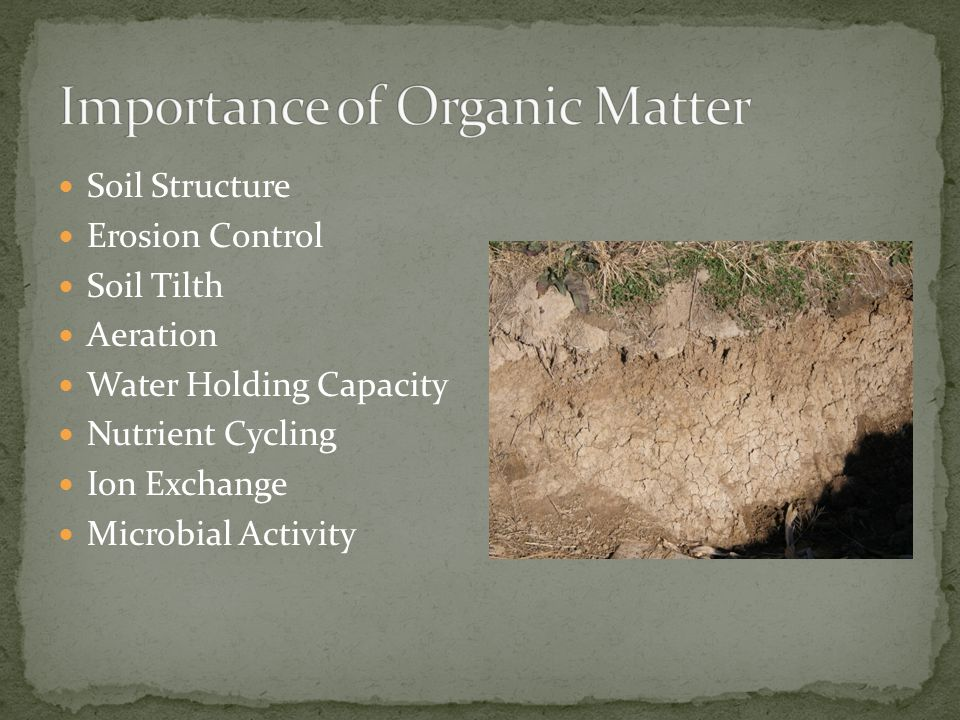 Soil Structure Erosion Control Soil Tilth Aeration Water Holding Capacity Nutrient Cycling Ion Exchange Microbial Activity