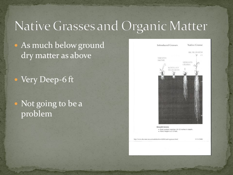 As much below ground dry matter as above Very Deep-6 ft Not going to be a problem