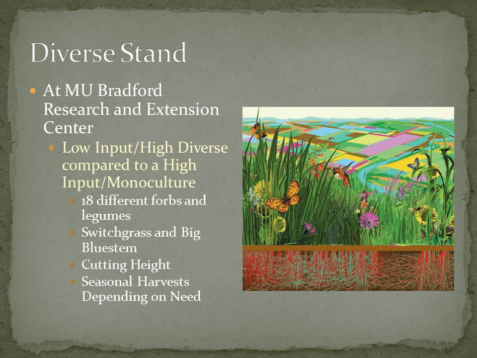 At MU Bradford Research and Extension Center Low Input/High Diverse compared to a High Input/Monoculture 18 different forbs and legumes Switchgrass and Big Bluestem Cutting Height Seasonal Harvests Depending on Need